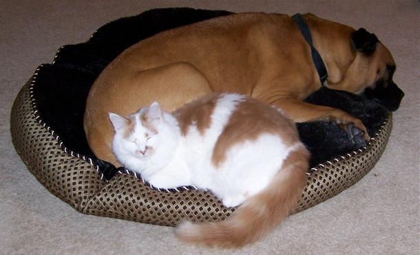 Sharing-Hootch's-bed