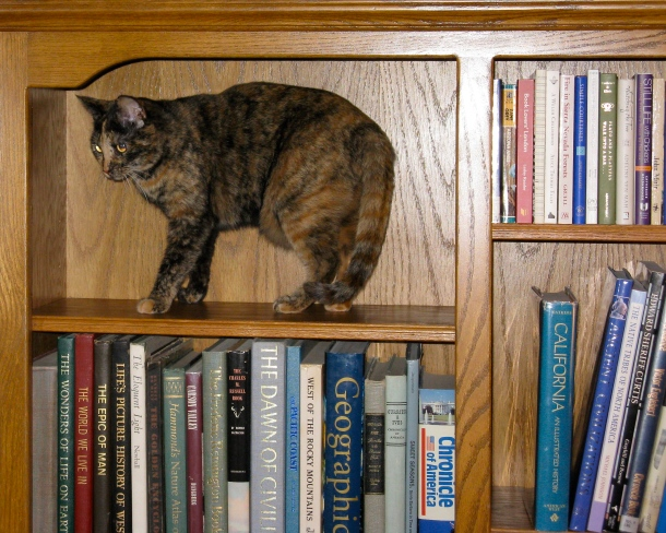 Cat-in-bookcase