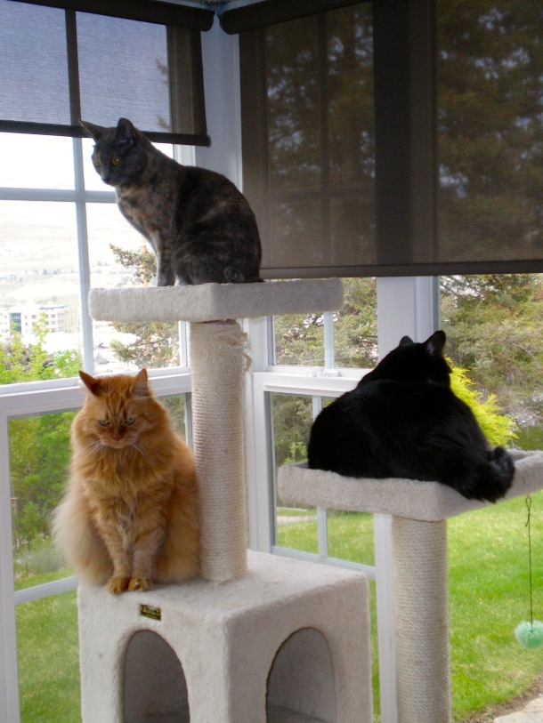 cats-in-their-condo