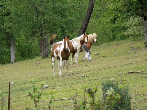 horses-in-meadow