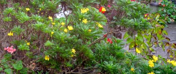Silvia's-magic-garden