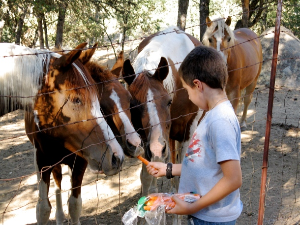 Carrots-for-the-horses