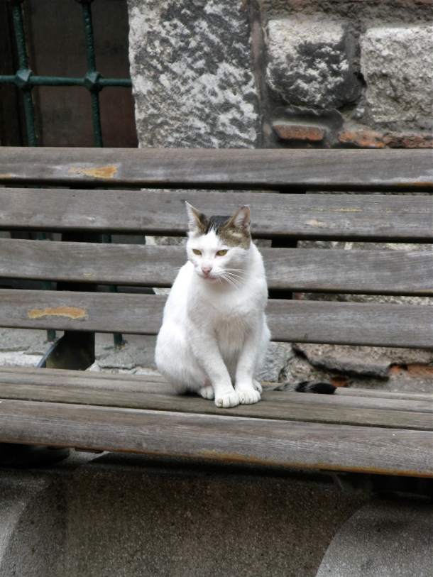 Cat-on-bench