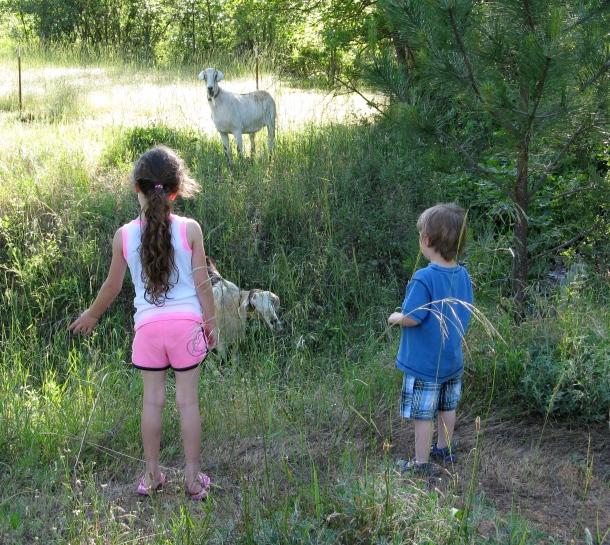 Kids-visit-goats