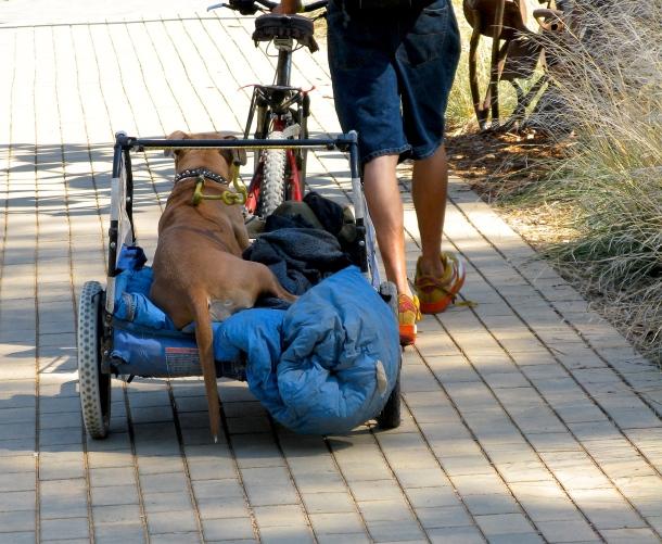 Dog-in-cart
