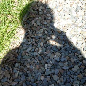 "Designer shadows the ""next bigthing"""