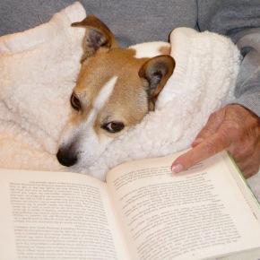 Dog who readsThoreau