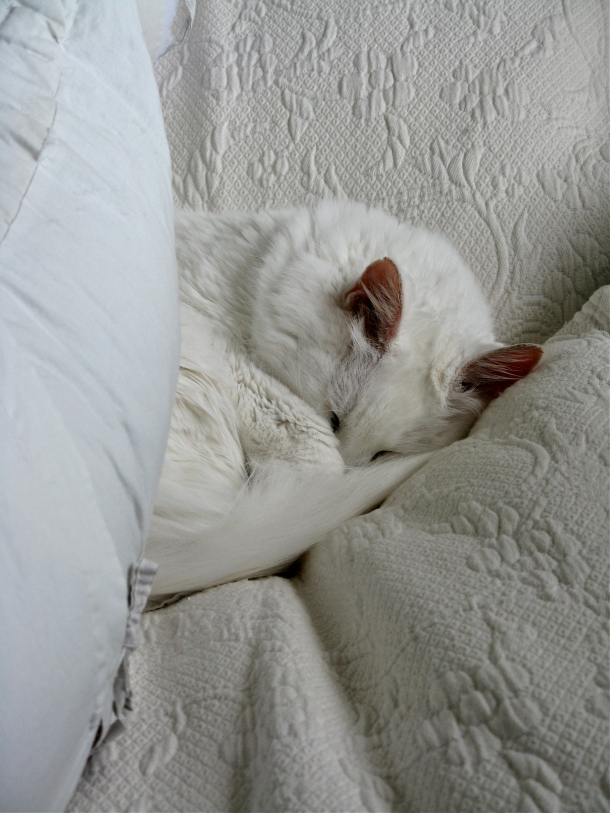 snow-takes-a-catnap