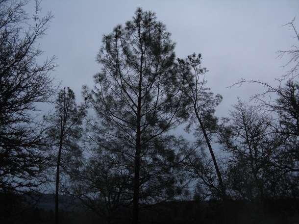 trees-at-nightfall